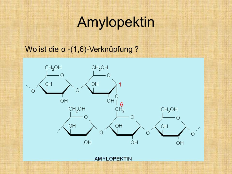 Amylopektin Wo ist die α -(1,6)-Verknüpfung 1 6