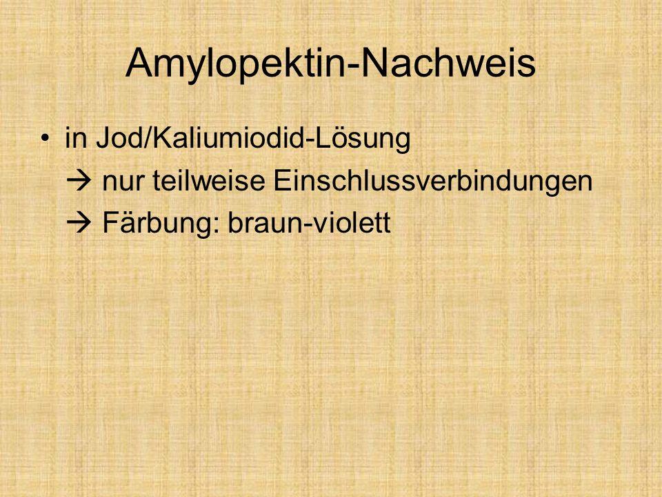 Amylopektin-Nachweis