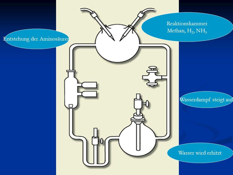 Entstehung der Aminosäuren