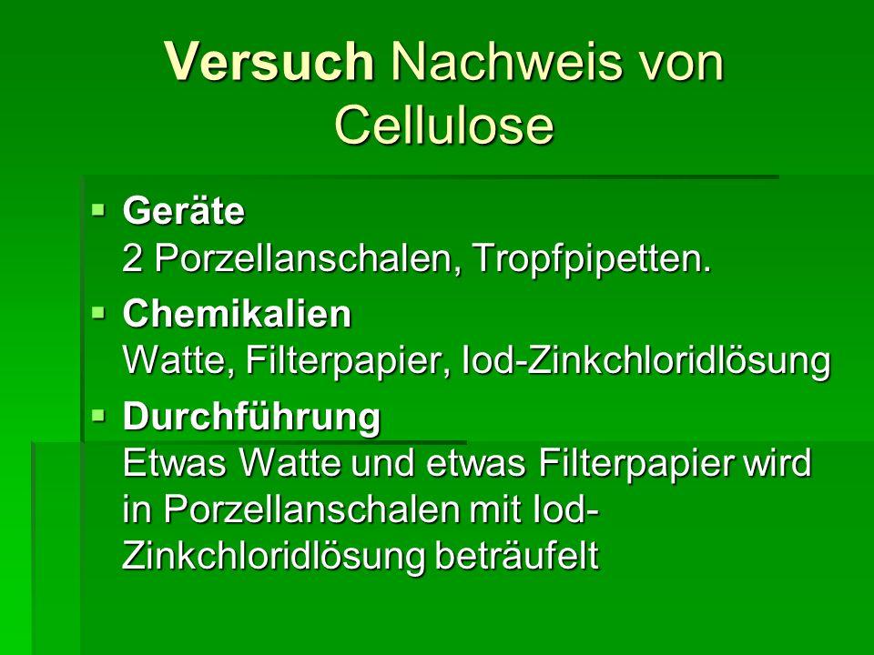 Versuch Nachweis von Cellulose