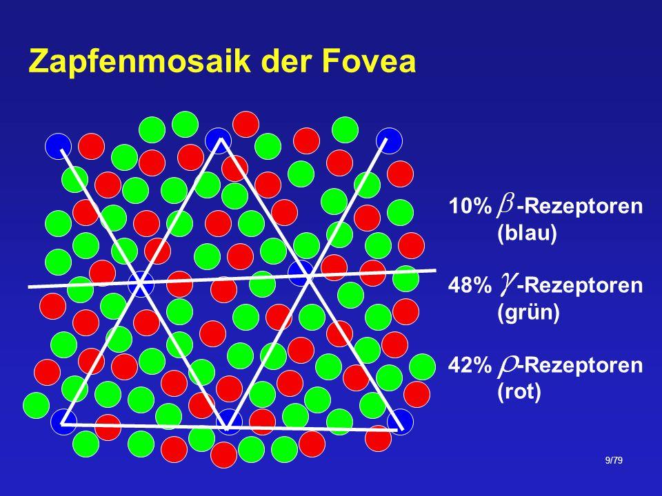 Zapfenmosaik der Fovea