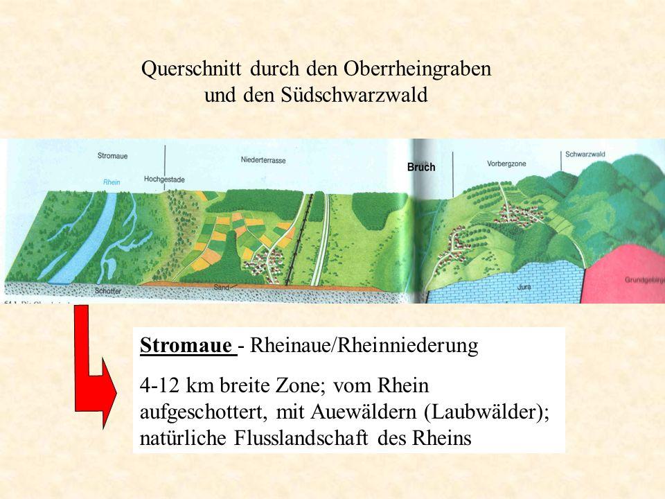 Querschnitt durch den Oberrheingraben und den Südschwarzwald
