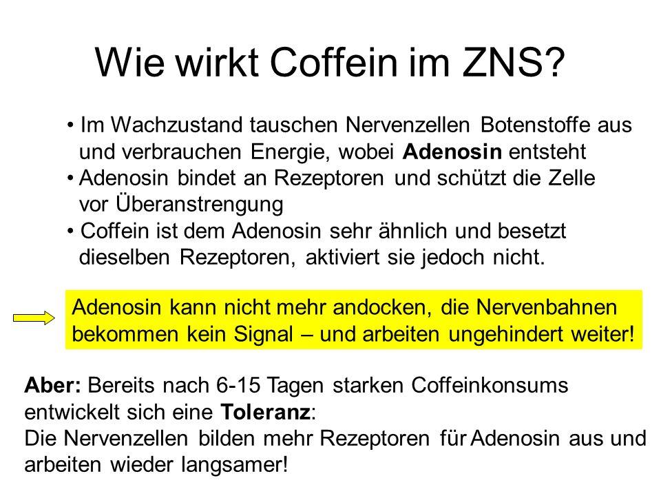Wie wirkt Coffein im ZNS