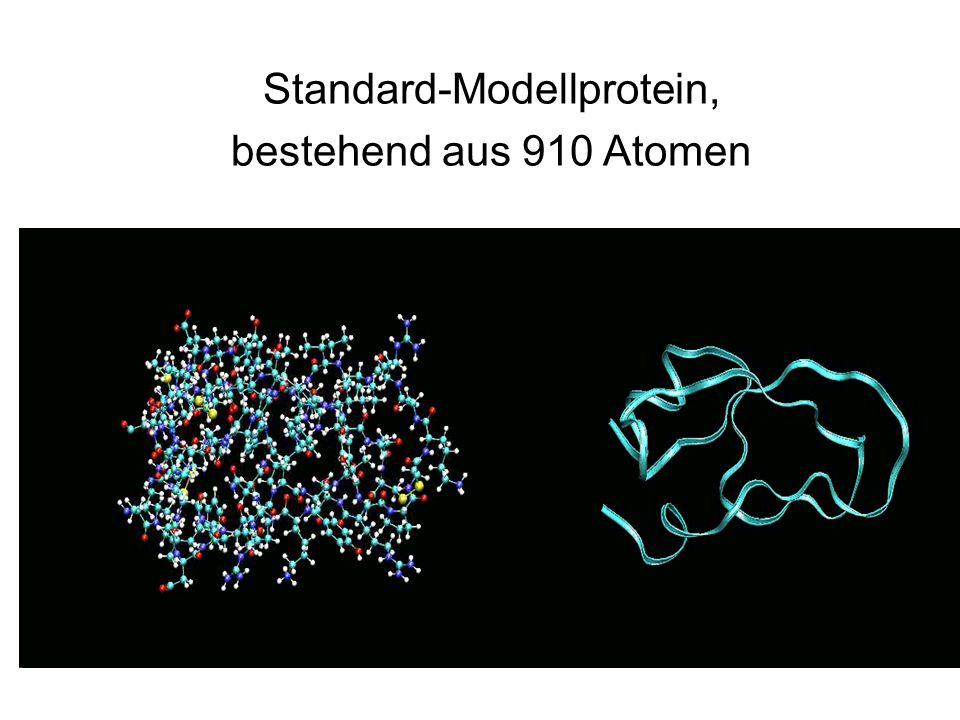 Standard-Modellprotein,