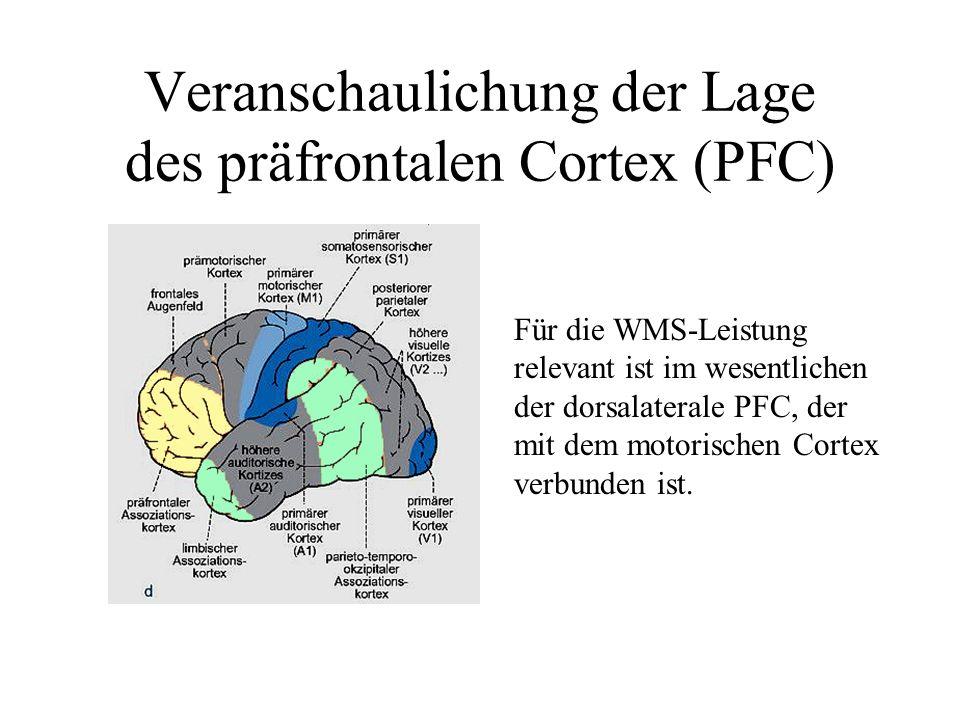Veranschaulichung der Lage des präfrontalen Cortex (PFC)