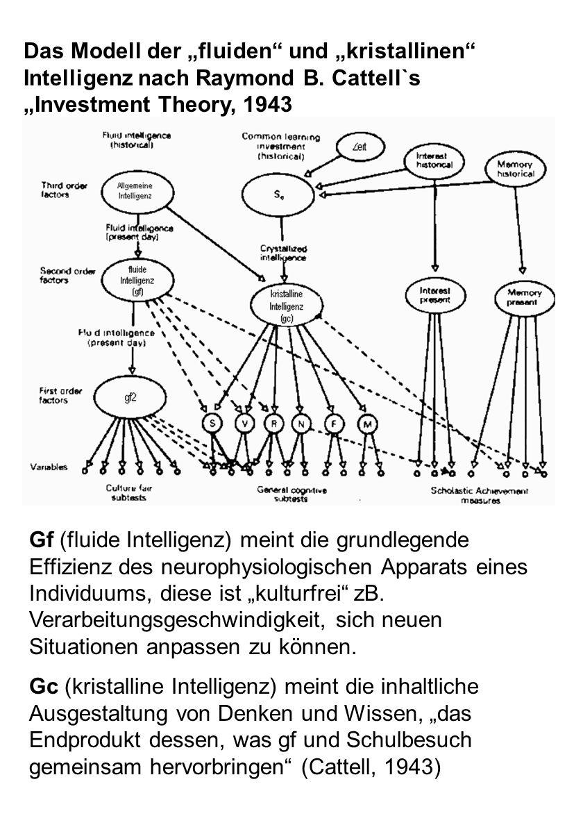 """Das Modell der """"fluiden und """"kristallinen Intelligenz nach Raymond B"""