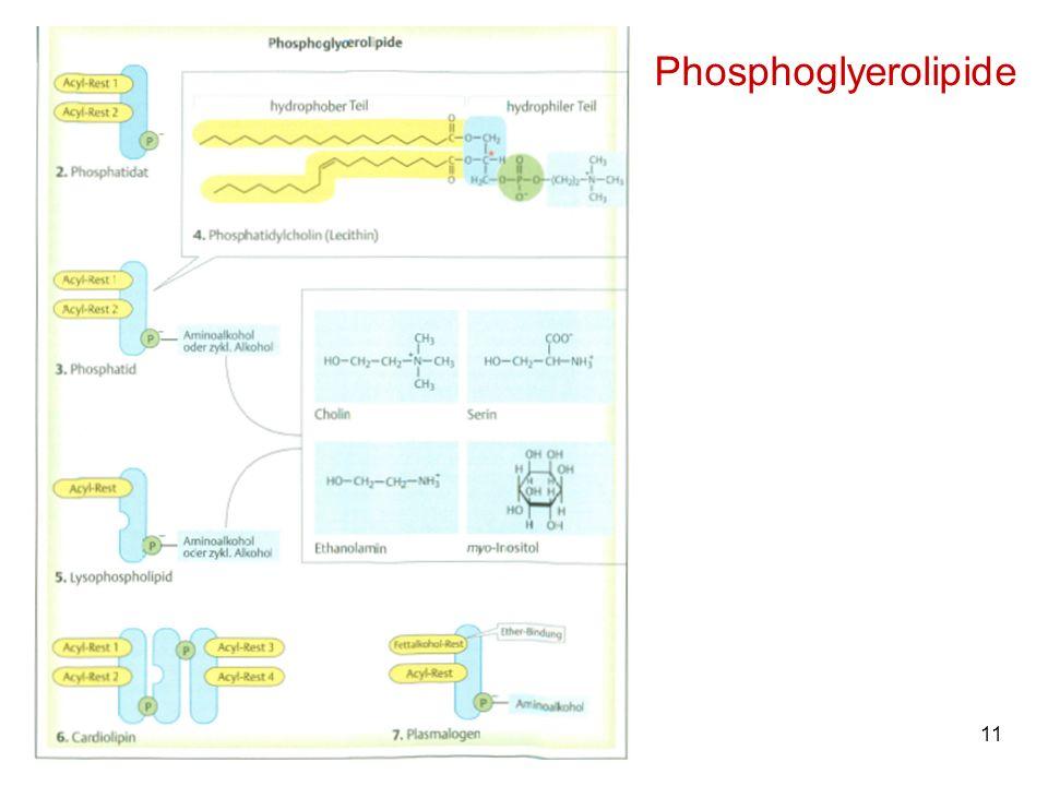 Phosphoglyerolipide M. Kresken