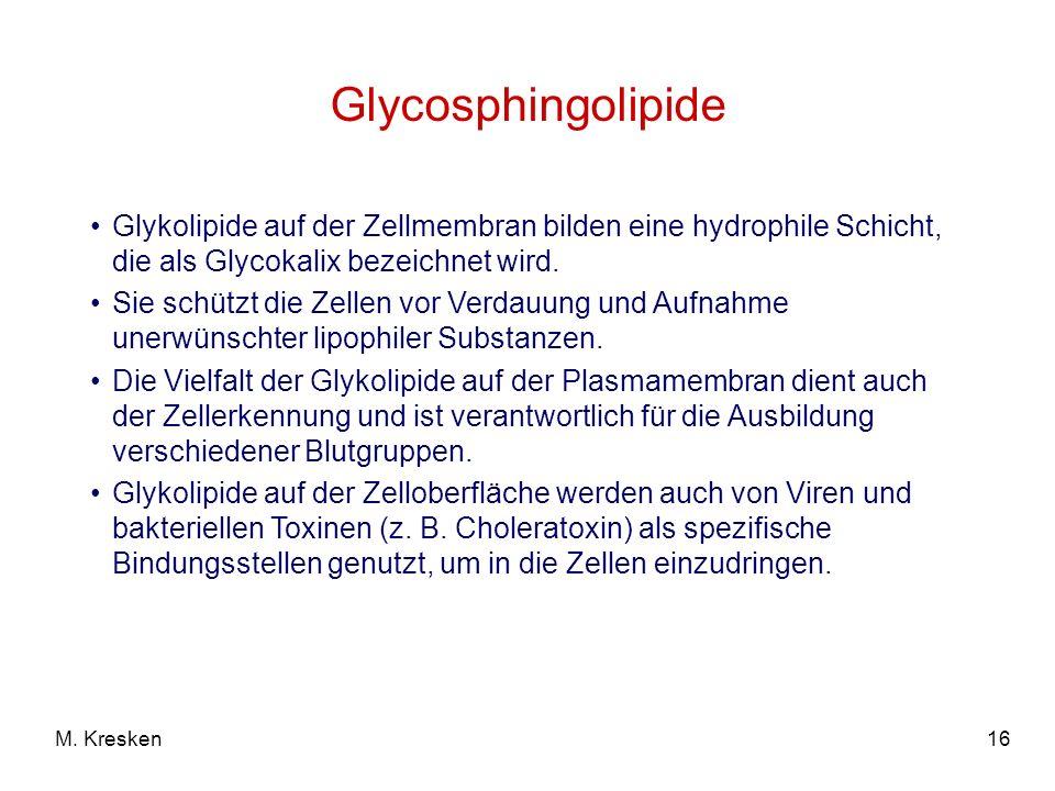 Glycosphingolipide Glykolipide auf der Zellmembran bilden eine hydrophile Schicht, die als Glycokalix bezeichnet wird.