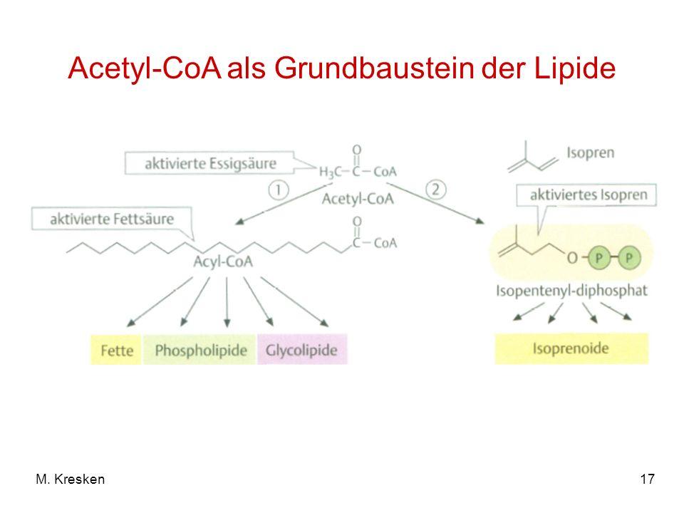 Acetyl-CoA als Grundbaustein der Lipide