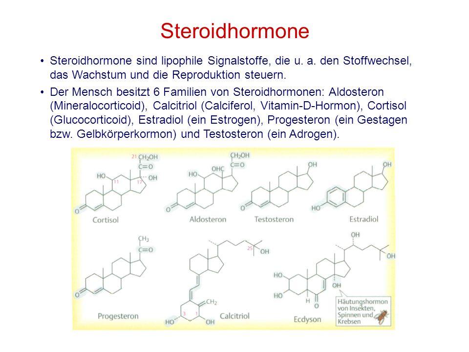 Steroidhormone Steroidhormone sind lipophile Signalstoffe, die u. a. den Stoffwechsel, das Wachstum und die Reproduktion steuern.