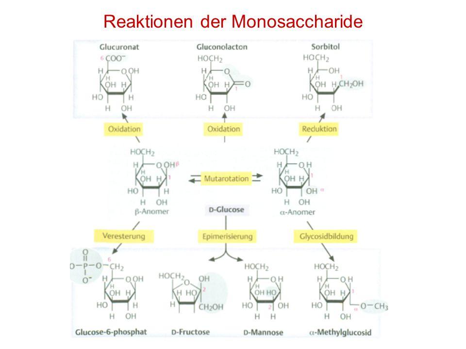 Reaktionen der Monosaccharide