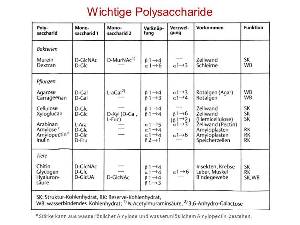 Wichtige Polysaccharide