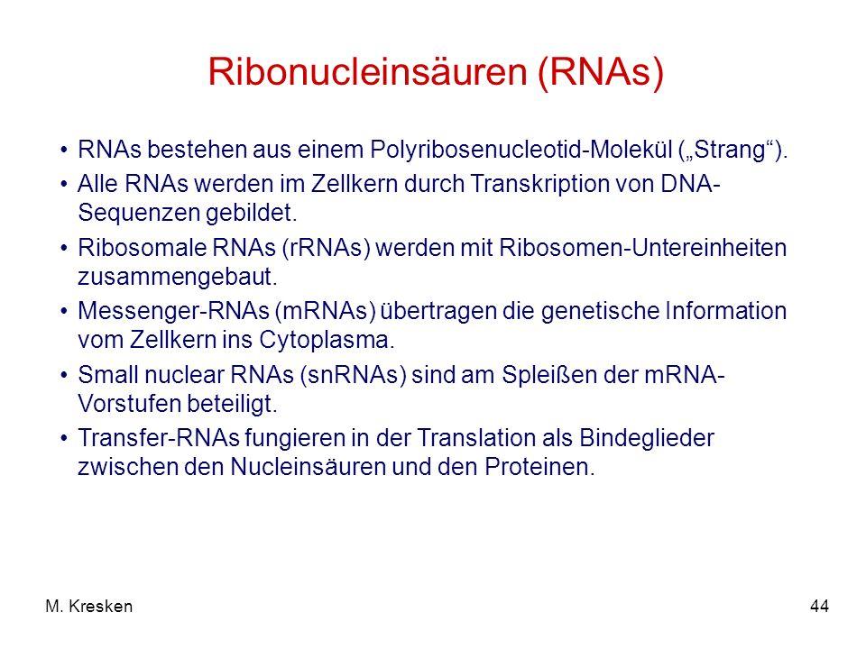 Ribonucleinsäuren (RNAs)
