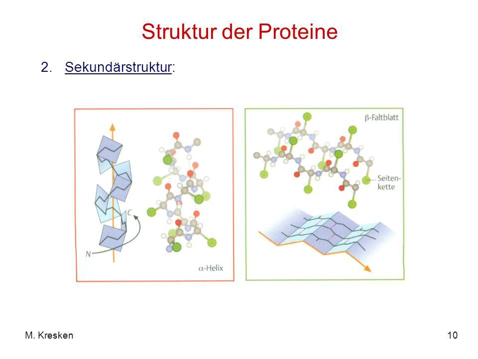 Struktur der Proteine Sekundärstruktur: M. Kresken