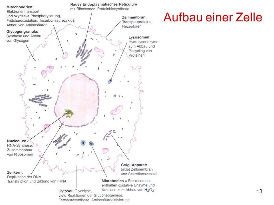 Aufbau einer Zelle M. Kresken