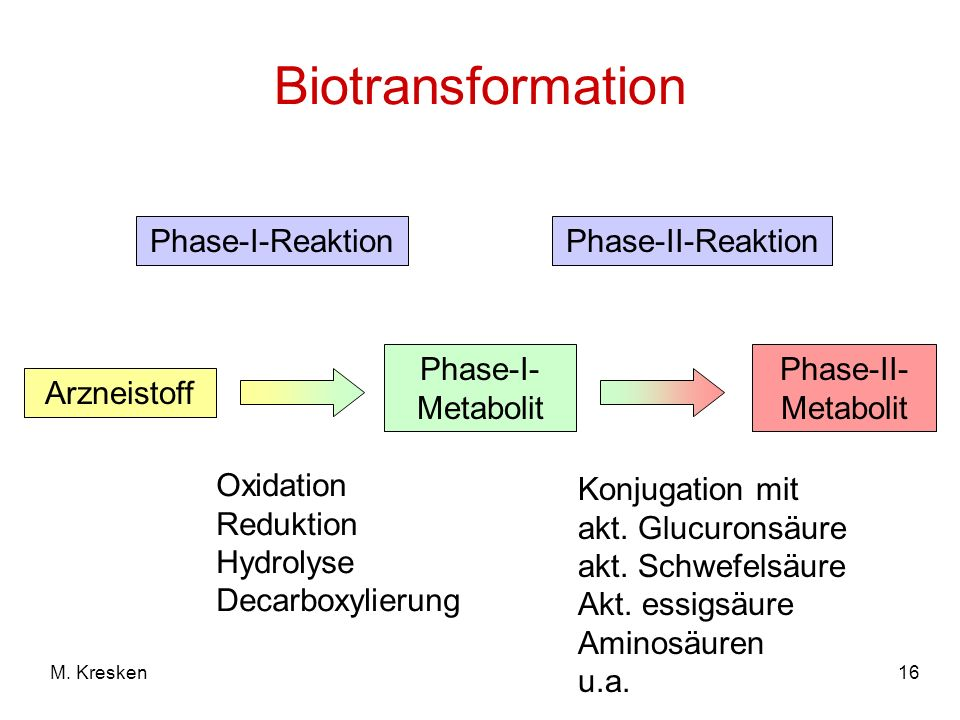 Biotransformation Phase-I-Reaktion Phase-II-Reaktion Phase-I-Metabolit