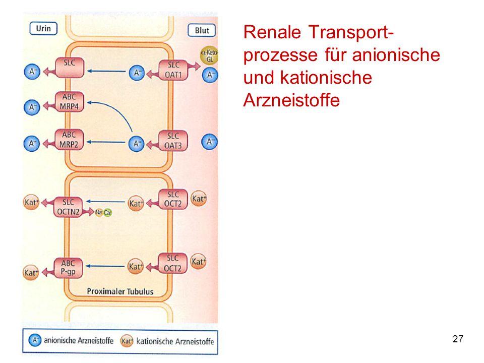 Renale Transport-prozesse für anionische und kationische Arzneistoffe