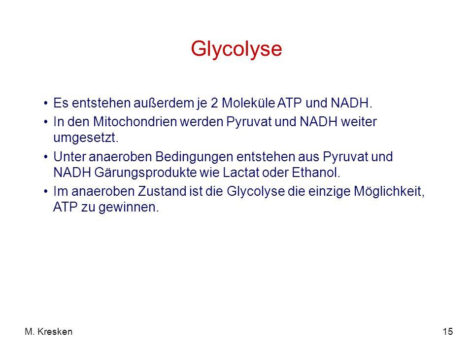 Glycolyse Es entstehen außerdem je 2 Moleküle ATP und NADH.