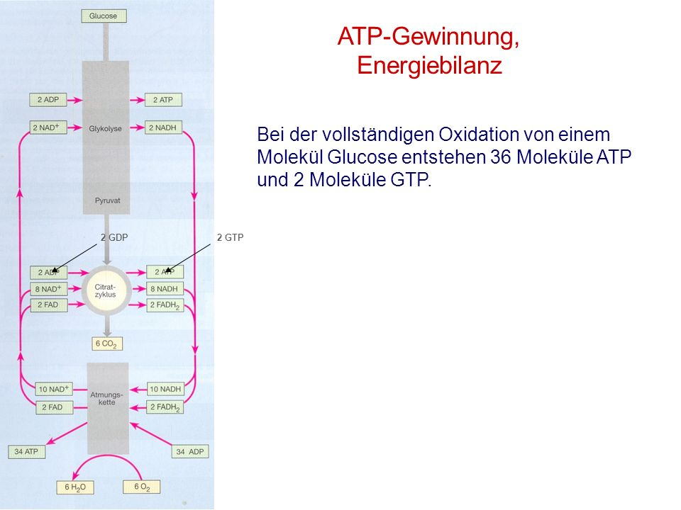ATP-Gewinnung, Energiebilanz