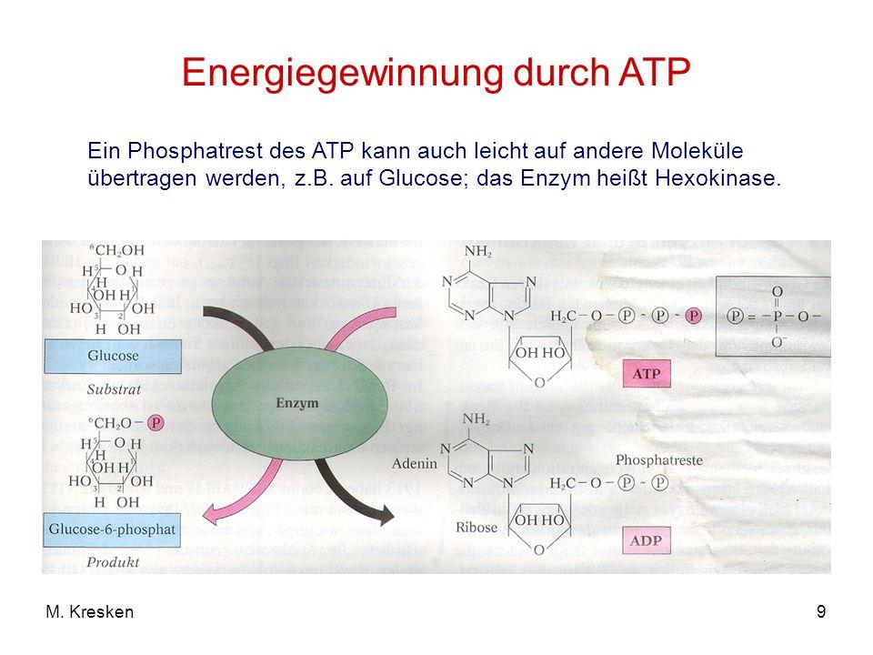 Energiegewinnung durch ATP