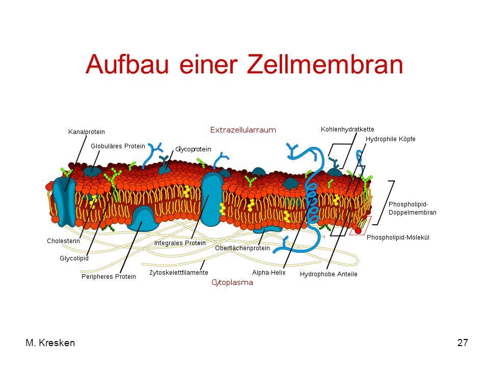 Aufbau einer Zellmembran
