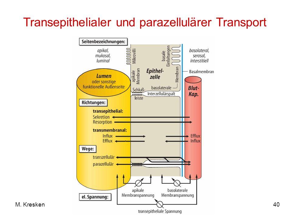 Transepithelialer und parazellulärer Transport