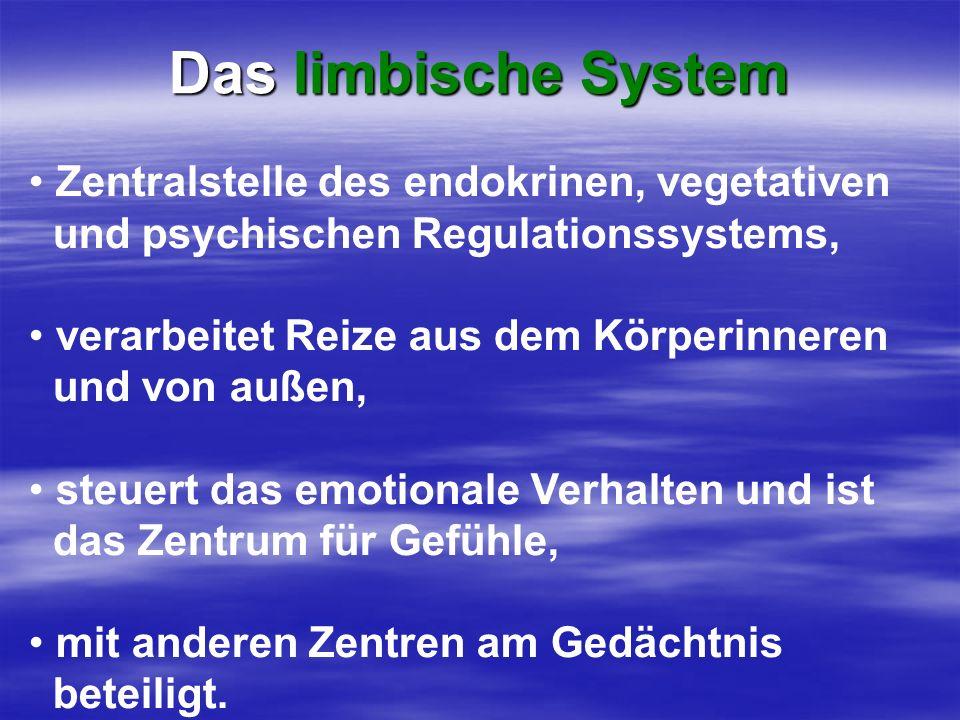 Das limbische System Zentralstelle des endokrinen, vegetativen