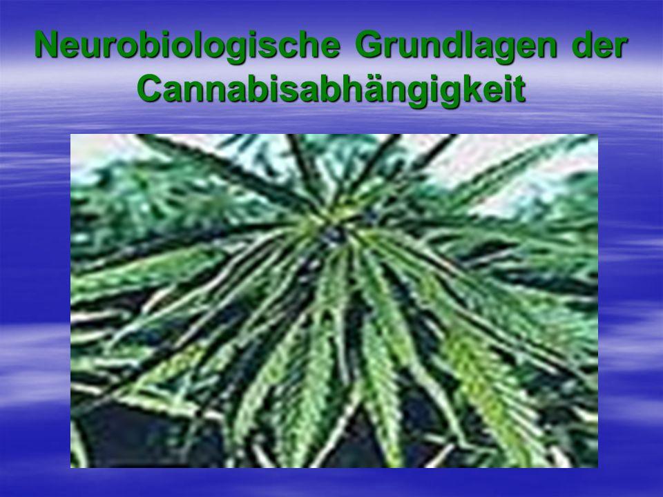 Neurobiologische Grundlagen der Cannabisabhängigkeit