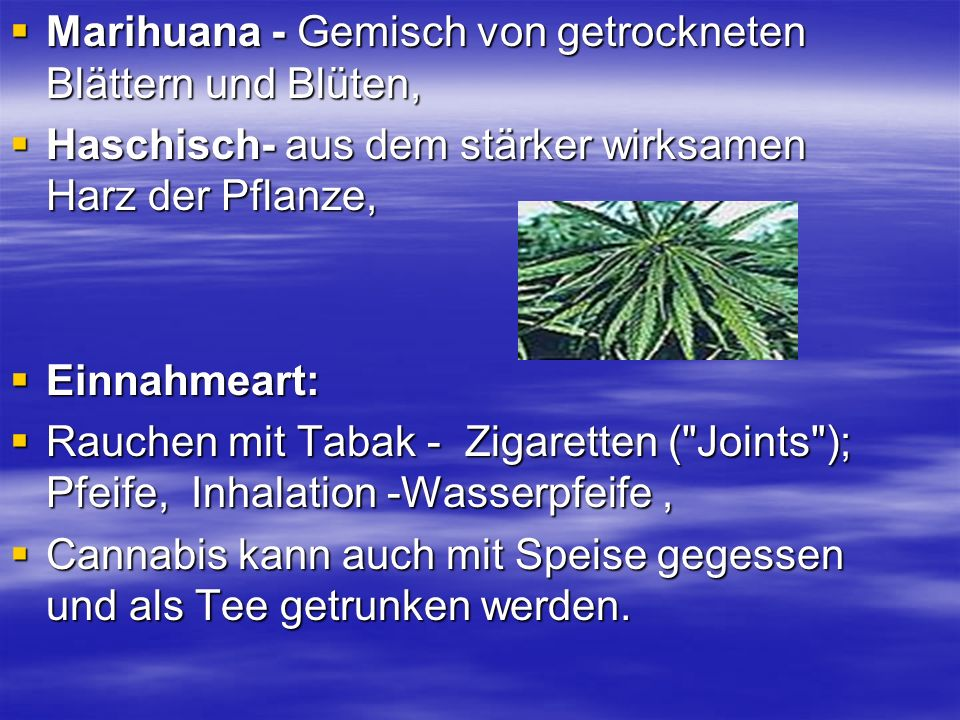 Marihuana - Gemisch von getrockneten Blättern und Blüten,