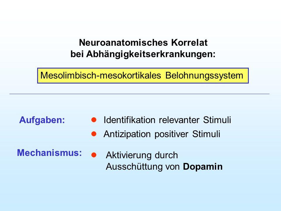 Neuroanatomisches Korrelat bei Abhängigkeitserkrankungen: