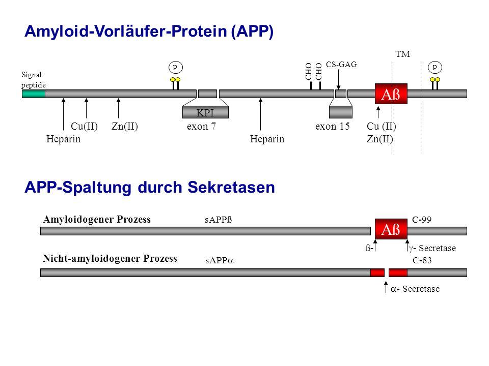 Amyloid-Vorläufer-Protein (APP)