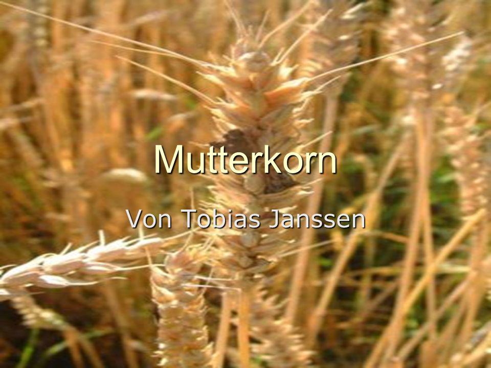 Mutterkorn Von Tobias Janssen