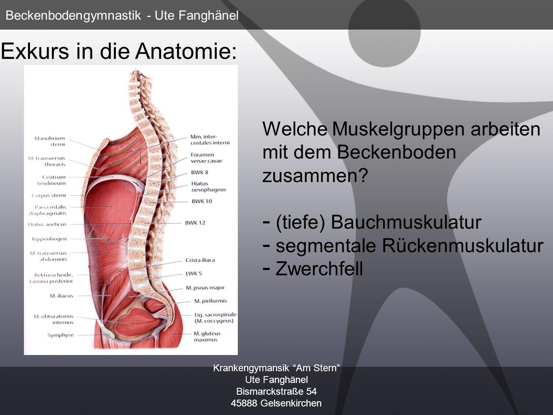 Exkurs in die Anatomie: