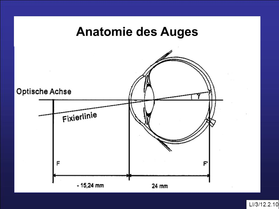 Anatomie des Auges LI/3/12.2.10
