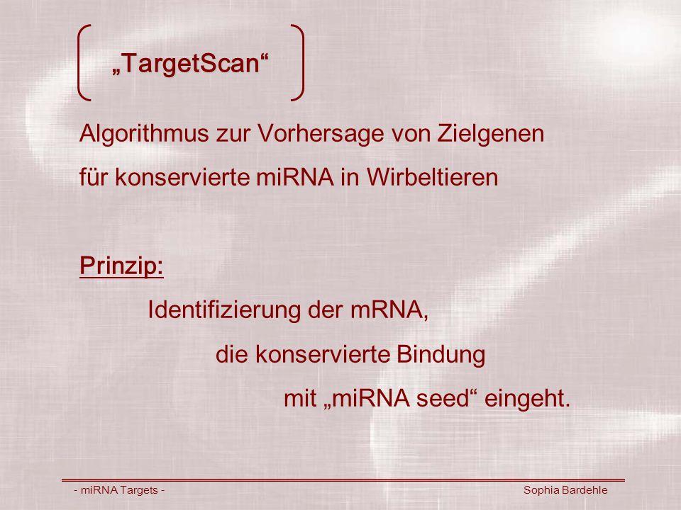 """""""TargetScan Algorithmus zur Vorhersage von Zielgenen"""