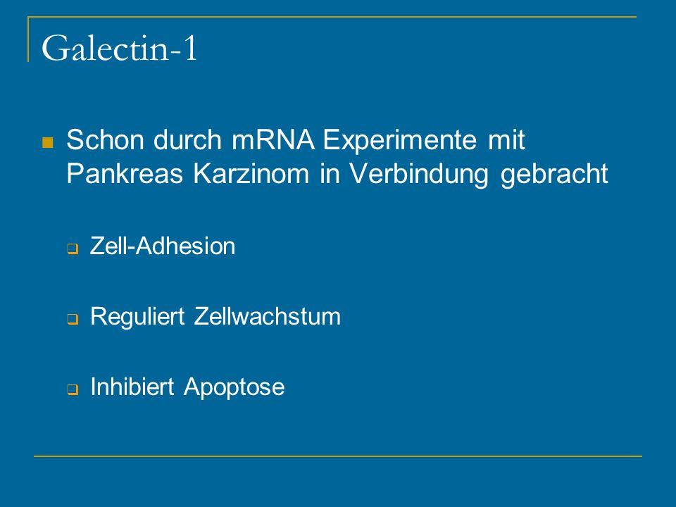 Galectin-1 Schon durch mRNA Experimente mit Pankreas Karzinom in Verbindung gebracht. Zell-Adhesion.