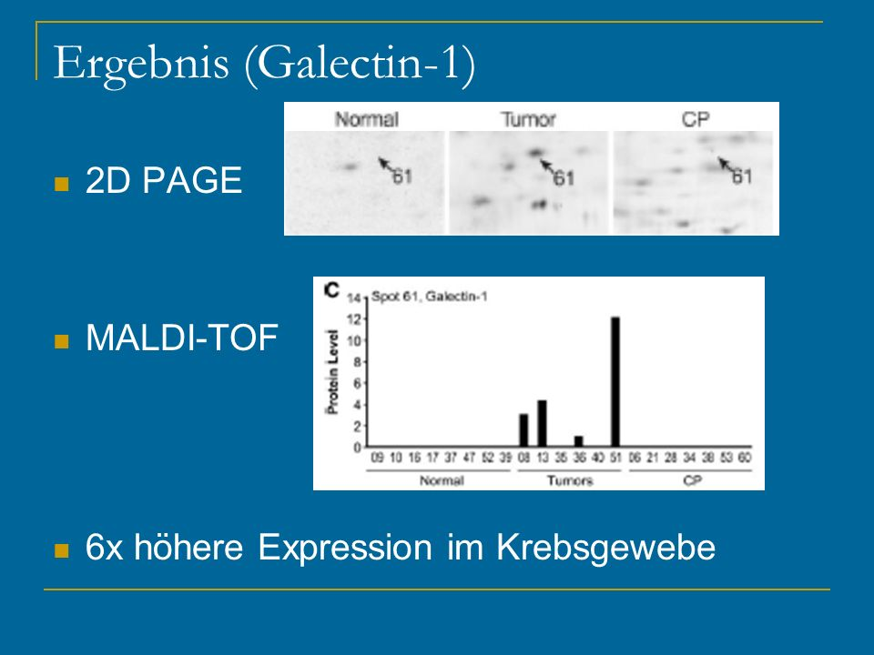 Ergebnis (Galectin-1) 2D PAGE MALDI-TOF