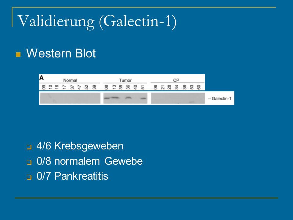 Validierung (Galectin-1)