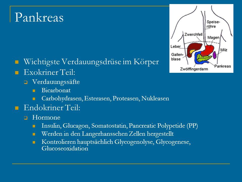 Pankreas Wichtigste Verdauungsdrüse im Körper Exokriner Teil: