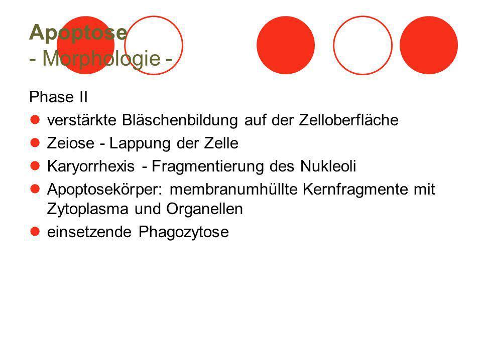 Apoptose - Morphologie -