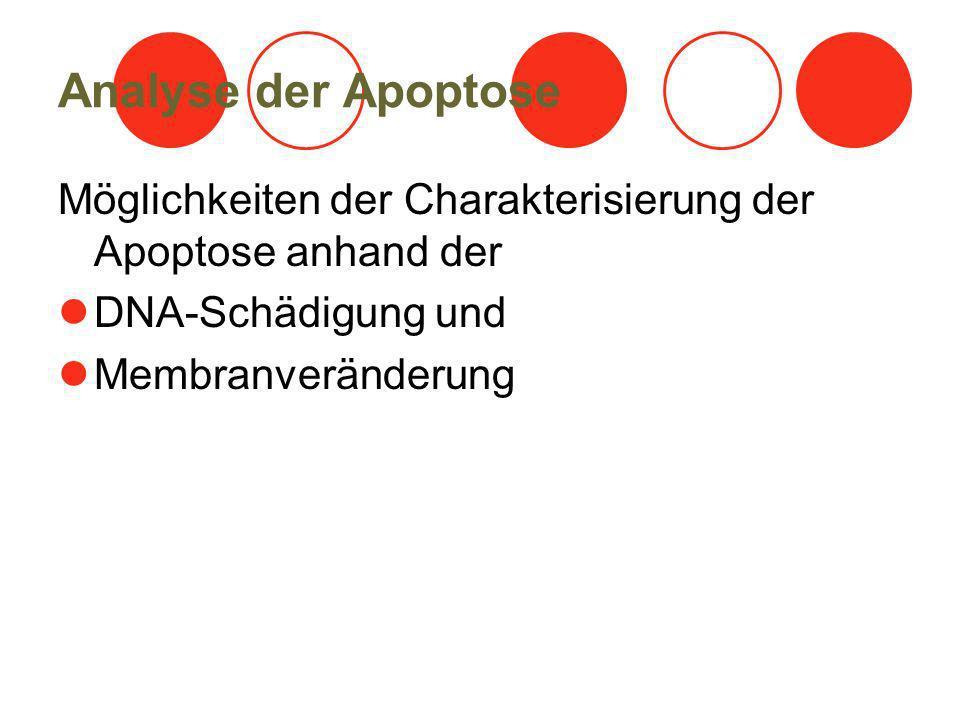 Analyse der Apoptose Möglichkeiten der Charakterisierung der Apoptose anhand der. DNA-Schädigung und.