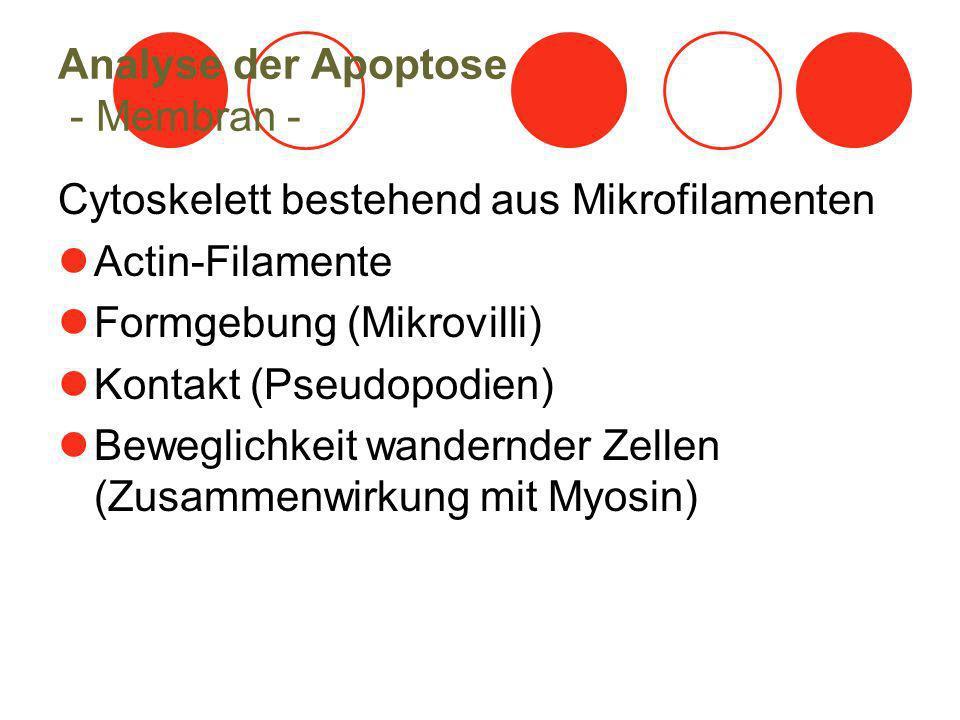 Analyse der Apoptose - Membran -