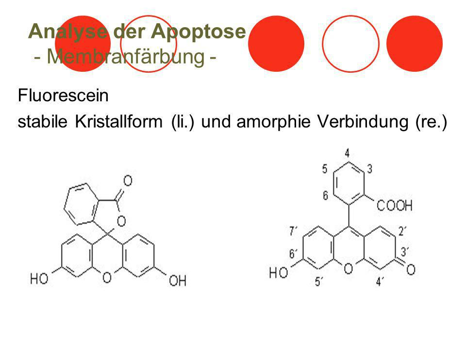 Analyse der Apoptose - Membranfärbung -