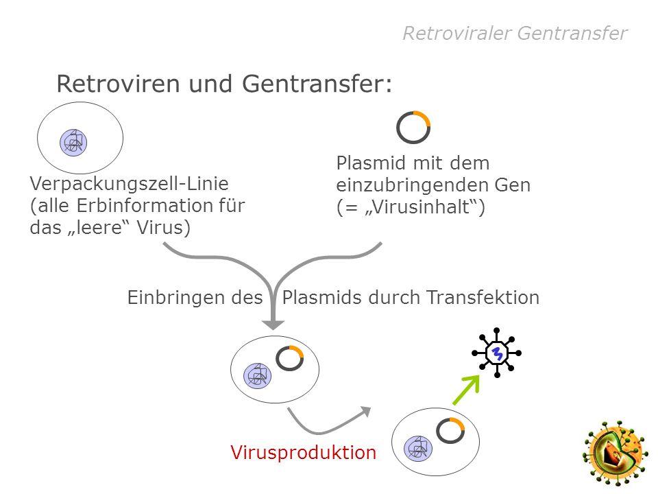 Retroviren und Gentransfer: