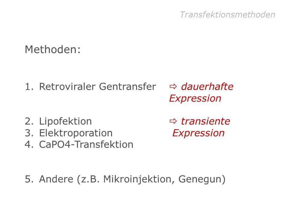 Methoden: Retroviraler Gentransfer  dauerhafte Expression