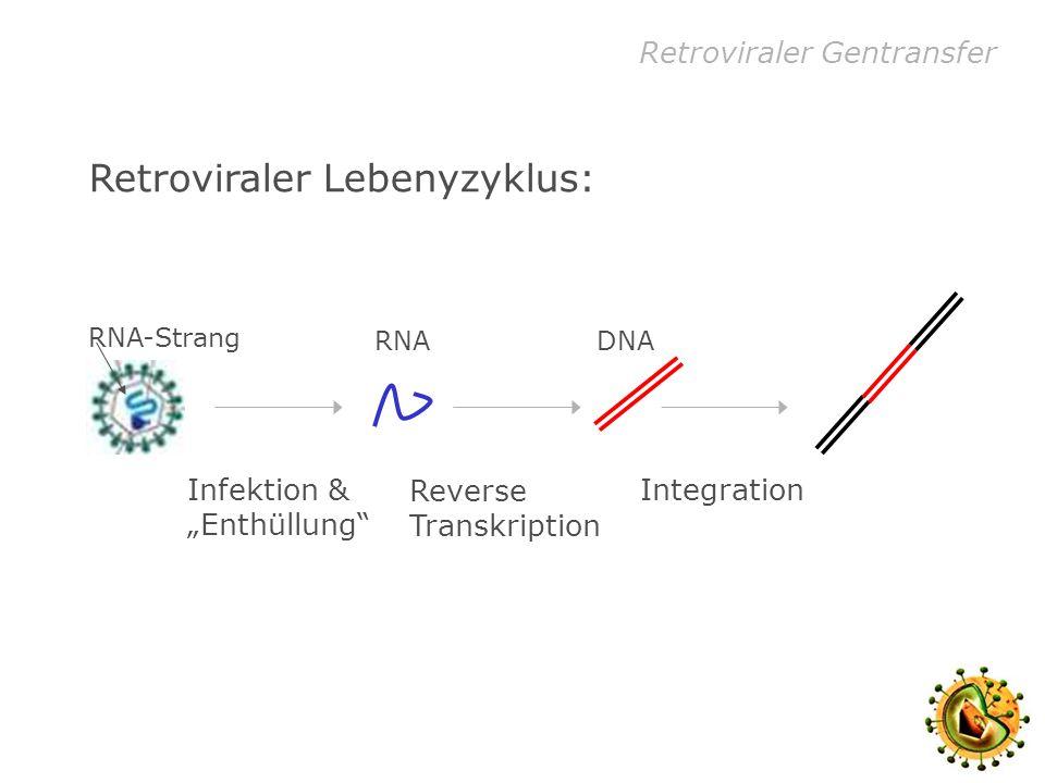 Retroviraler Lebenyzyklus: