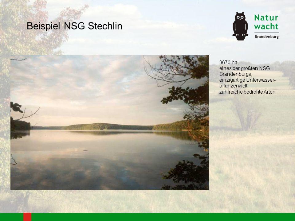 Beispiel NSG Stechlin 8670 ha, eines der größten NSG Brandenburgs,