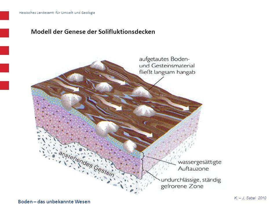 Modell der Genese der Solifluktionsdecken