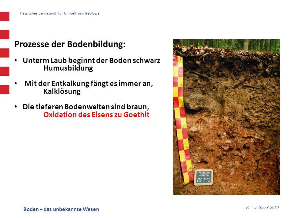 Prozesse der Bodenbildung: