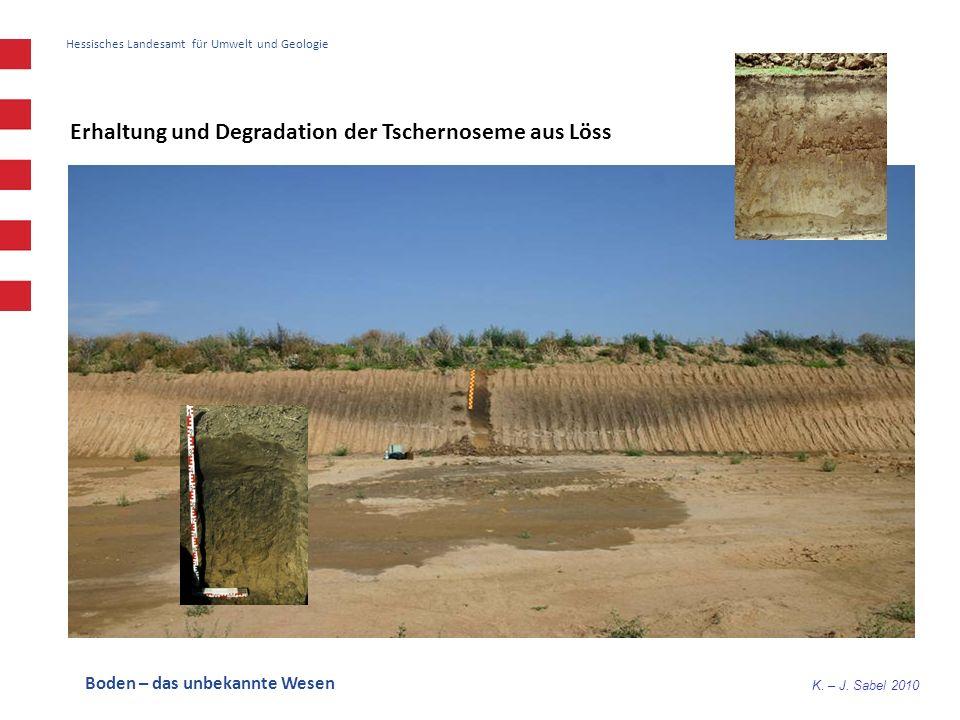 Erhaltung und Degradation der Tschernoseme aus Löss